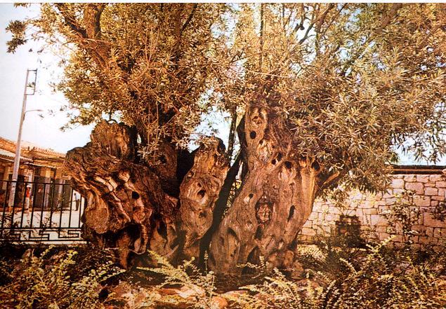 oitl tree 2